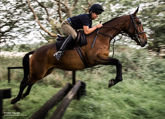 A winner in the 2017 Army Photographic Competition (Defence Images) Tags: army armysport beachride hcmr horse kingstrooproyalhorseartillery mod norfolk regiments sport woolwich armyphotographiccompetition2017 defence free defense uk british military unitedkingdom gbr