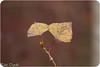 Autunno (paolotrapella) Tags: autunno foglie bokeh sfondo tamron70300vc canoneos paolotrapella