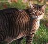 la 1 (Kens images) Tags: lance love friend beauty companion curious fun