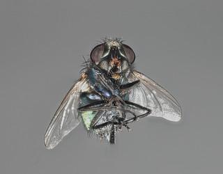 Fly 8