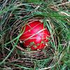 IMG_20170903_151402261 (Armen Sarkiss) Tags: deathcap mushroom poisonousmushroom poison red deathcapmushroom