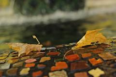 autumn colours (notpushkin) Tags: dresden herbst autumn saxony sachsen grosergarten mosaikbrunnen fountain leaves blätter yellow park
