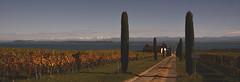 Vue sur les Bernoises (Fabrice1965) Tags: suisse switzerland suiza alpes automne auvernier neuchâtel cantondeneuchâtel mönch jungfrau eiger lacdeneuchâtel vignes domaine viticole couleurs nikon d750