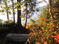 IMG_3981 Stanley Park (vancouverbyte) Tags: vancouver vancouverbc vancouvercity
