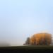 Syksyn värit / Autumn colors