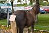 €800  -  Ballinasloe Horse Fair (Clem Mason) Tags: festival ballinasloe horse fail galway 2017 october clemmason canon ngc