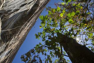 Whiteside Mountain, Highlands, Nantahala National Forest, Jackson County, North Carolina