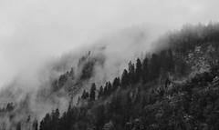 Lonely Tomorrow (FlavioSarescia) Tags: fog foggy autumn trees tree switzerland europa sony home nature