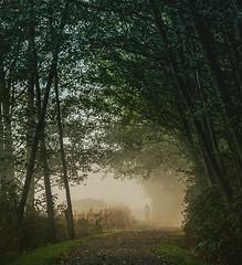 Walking For Clarity (jeanmarie's photography) Tags: nikond810 nikon mood moody weather walking washingtonstate foggy fog jeanmarie jeanmarieshelton