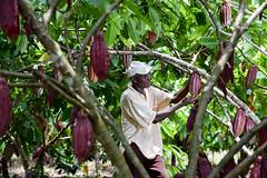 NP_Cacao_Guaviare29