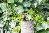 Kingfisher bird from Kerala India (arnaud_martinez) Tags: alcedo alleppey blue brown eurasian india kerala kingfisher macro nature white wildlife atthis backwater beautiful bird birdwatching body closeup diving feather fish fishing halcyon river smyrnensis throated wild wings