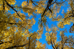 Those gorgeous Colorado skies and fall foliage above