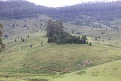 Kodaikanal (Balaji Photography - 5 M views and Growing) Tags: kodaikanal canon canondslr canoneos canon70d scenic tours tourist touristspots touristspot toursindia tourism naturesfinest beautiful green greenery greenforest