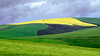 Buttery Flow (Steve Crane) Tags: overberg southafrica westerncape canola fields wheat yellow green