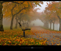 Foggy fall day at Burnaby Mountain Park, BC, Canada (Ann Badjura Photography) Tags: vancouver burnaby burnabymountain fall autumn fallcolours fog path bench trees britishcolumbia canada westcoast miss604 insidevancouver colourfulvancouver ctvphotos 604now georgiastraight scenery leaves beautifulbc photonewsgallery pnw discoverpnw pacificnorthwest photography annbadjura couple love 24hrvancouver
