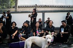 * (Sakulchai Sikitikul) Tags: street snap streetphotography songkhla sony voigtlander 28mm thailand monkey dog