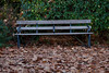 Local Autumn Bench (Adam Swaine) Tags: peckehamryepark leaves bench autumn autumncolours leaf england english canon britain seasons fourseasons uk londonparks