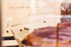 Bees! Aux Merveilleux de Fred (like / want / need) Tags: paris september fall autumn automne auxmerveilleuxdefred patisserie pastry 7eme rue cler bees bee abeille