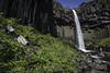 Svartifoss Plunge (courtney_meier) Tags: iceland nationalpark skaftafell svartifoss basalt columnarbasalt handheld longexposure waterfall wildflowers