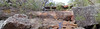Maddens Creek (Tony Markham) Tags: maddenscreek creek stream 10b 10bfiretrail dharawalnationalpark 10r 10rfiretrail firetrail trail track dharawal