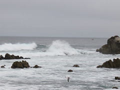 20160817 Californie Pacific Grove - (113) (anhndee) Tags: usa californie california pacificgrove