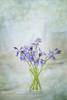 Bluebells (borealnz) Tags: bluebells vase jar glass flower spring blue pretty