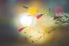 Pastel (Dhina A) Tags: sony a7rii ilce7rm2 a7r2 kaleinar mc 100mm f28 kaleinar100mmf28 5n m42 nikonf russian ussr soviet 6blades crimsonflax bokeh