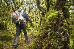 Alpine Forest (newzild) Tags: newzealand teararoa hiker tramper trail route long distance capereinga bluff nzl alpine forest fangorn lord rings lotr mountain