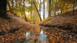 Autumn in Velp