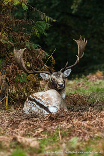 Stag - I see you!