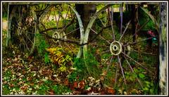 Wheeling in Autumn - HFF (Bob's Digital Eye) Tags: 2017 autumn autumncolourorcolorduh autumnleaves bobsdigitaleye canon canonefs1855mmf3556isll fallcolor fencedfriday hff t3i flicker flickr