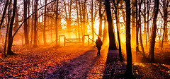 Sunset at Attingham No 2 (howard1916 - Something for everyone!) Tags: trees mist sunset nationaltrust shropshire shadows