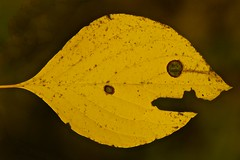 The Monster Inside Pac-man's Eye! (J Henry G) Tags: abstractart fallcolor leaves leafart fallleaves johnhenrygremmer
