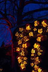 Kiss me for science (lacygentlywaftingcurtains) Tags: pumpkinferno uppercanadavillage pumpkins jackolanterns light bright night dark tree leaves