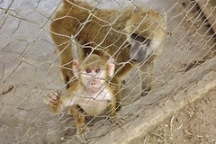 """Yellow Baboon • <a style=""""font-size:0.8em;"""" href=""""http://www.flickr.com/photos/152934089@N02/37566214336/"""" target=""""_blank"""">View on Flickr</a>"""