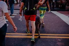 _MG_0037 (diniz.vittor) Tags: newyork street dog lane