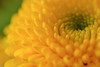.... yellow light ... (wolli s) Tags: nikon d7100 yellow sidelight sidelit macro