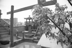 WDSC_3936-8W (Absurd Life as Sisyphus') Tags: 台南 林百貨 府城 古蹟 神社