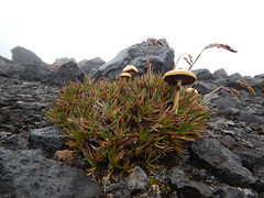 High altitude vegetation (Christophe Maerten) Tags: colombia colombie jungle cauca huila  purace paramo tierra indiguena native people parque natural parc volcan volcano vulkaan