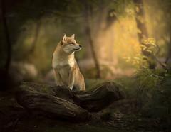 Enchanted Forest (Explored 15-10-17) (Paul M Loader) Tags: francephotographyworkshop fontainbleau melun alicja zmyslowska claudio piccoli special action portrait canon5dmkivmk4 ef85mmf18