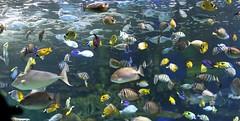 Ripley's Aquarium, Toronto. (Gillian Floyd Photography) Tags: ripleys aquarium toronto fish