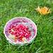 Smoothie-Bowl mit Cranberries und Goji-Beeren
