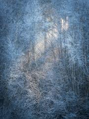 Frost Light (tobchasinglight) Tags: buckinghamshire bucks burnham burnhambeeches cityoflondon corporationoflondon englishwoodland farnhamcommon stokecommon woodland ©paulmitchell lpoty landscapephotographeroftheyear