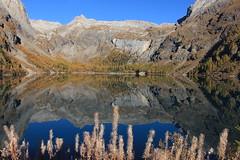 lac de Tzeusier (bulbocode909) Tags: valais suisse tzeusier lacdetzeusier montagnes nature automne lacs reflets jaune bleu paysages arbres forêts