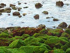Lisboa, at the sea (duqueıros) Tags: lissabon lisboa lisbon portugal stadt city sea meer algen seaweed steine stones duqueiros