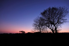 Before the night falls (peeteninge) Tags: sunset trees bluehour pink silhouettes zonsondergang roze bomen nature natuur sonyrx10 sony