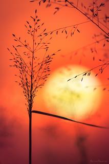 Silhuetas da Natureza