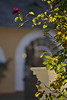 Rheingau:: Rose (tmertens0) Tags: rheingau hessen rhein flus river wein weinberge berge hills wine wneyard germany deitschland europa europe rheinsteig rüdesheim geisenheim östrichwinkel landschaft landscape sonne sun herbst fall kloster johannisberg blume flower jupiter 37a 135