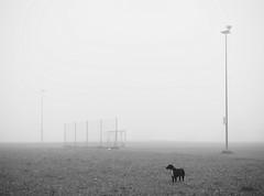 Fußballplatz (flori schilcher) Tags: schilcher fusballplatz luna hund tor nebel