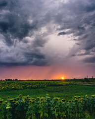 Sunset after the storm (Ákos Fekete) Tags: storm sunset sunsetclouds cloudsstormssunsetssunrises cloud clouds thunderstorm mbpictures beautiful red sun sky skyscape field outdoors summer 2017 july rain nature naturescomposition natural naturephotography hungary magyarország green orange grey sony sonyalpha6000 alpha a6000 ilce6000 ilce emount evil mirrorless milc csc amazing selp1650